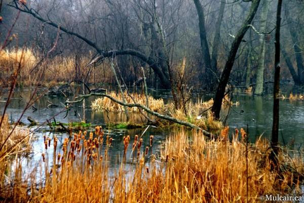 Art Pond