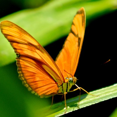 butterfly-maze