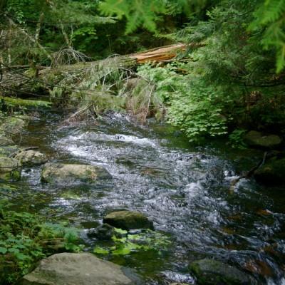 green-stream