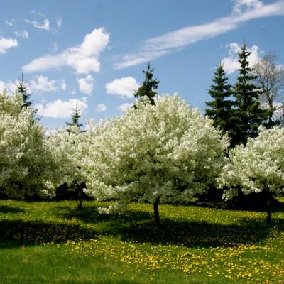 spring-blooms